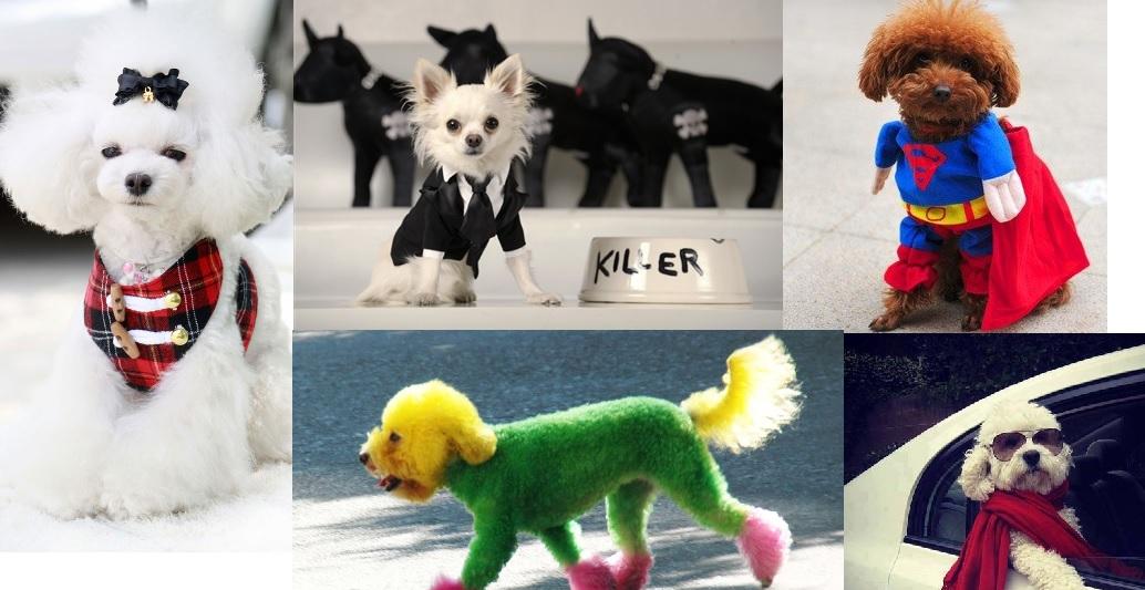 chirurgia estetica per cani e gatti