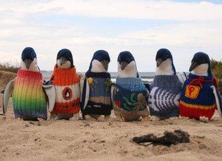 Maglioni Per Pinguini Aiuto Australia Tragedia Mare Fuoriuscita Petrolio Nuova Zelanda Disastro