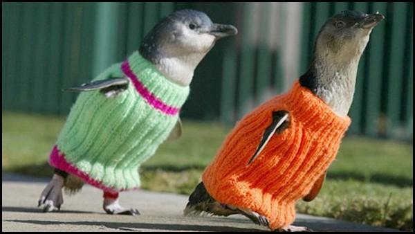 Maglioni Per Pinguini Aiuto Australia Tragedia Mare Fuoriuscita Petrolio Nuova Zelanda Disastro Ambiente