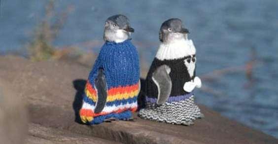 Maglioni Per Pinguini Aiuto Australia Tragedia Mare Fuoriuscita Petrolio Nuova Zelanda Disastro Penguini Fondation