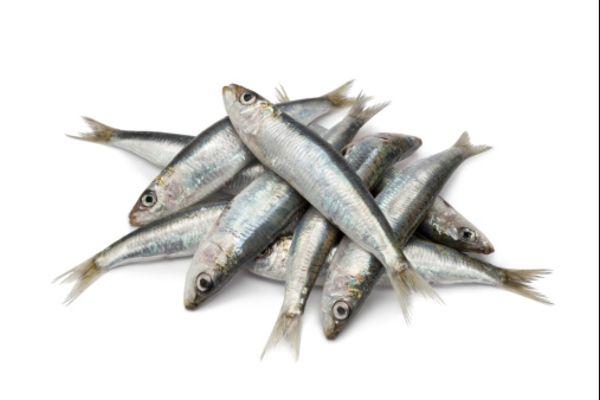 insonnia pesce azzurro