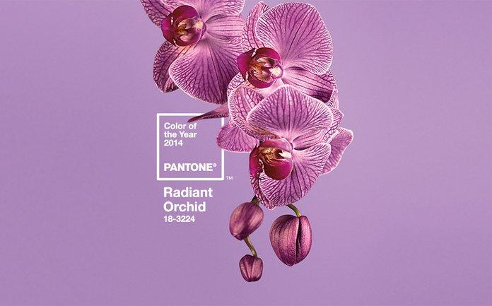 Radiant Orchid Pantone Color Institute Colori Tonalità Anno 2014