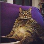 I Gatti Piu Belli Web Social Instagram Facebook Followers Like Pagine Seguaci Internet Gatto Bello