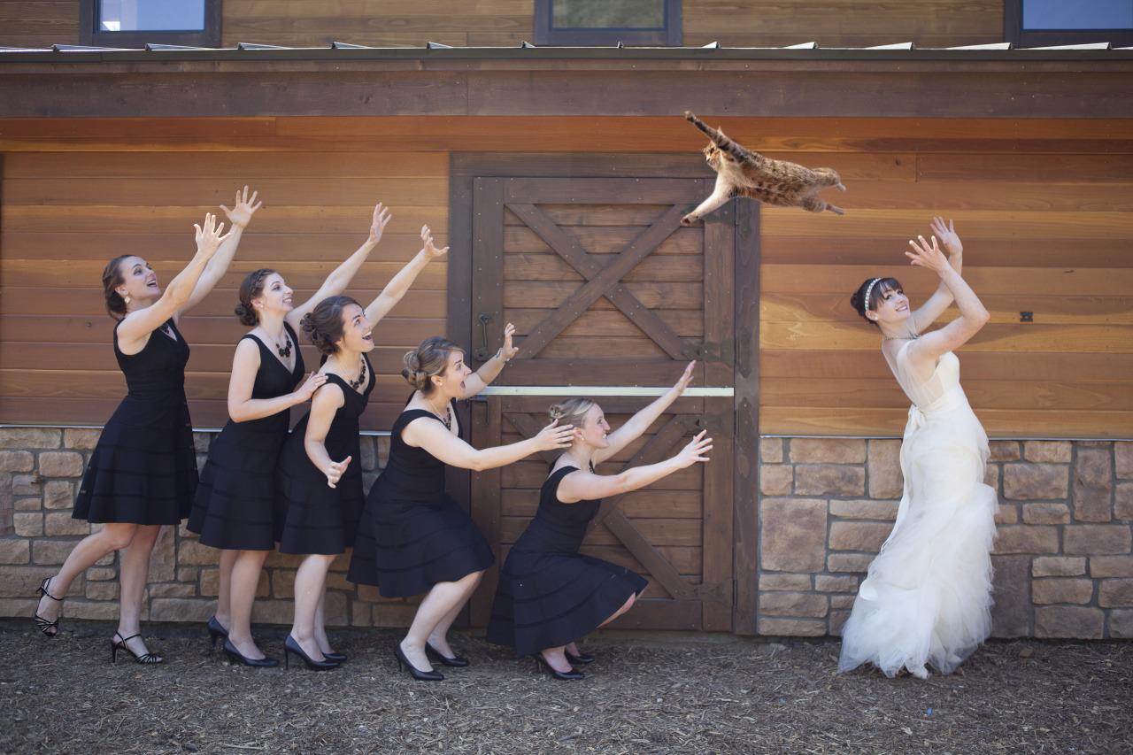 Brides Throwing Cats Tumblr Spose Matrimonio Lancio Gatti Bouquet Damigelle